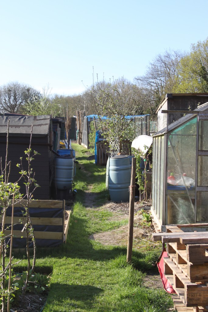 Allotment Sheds (1)