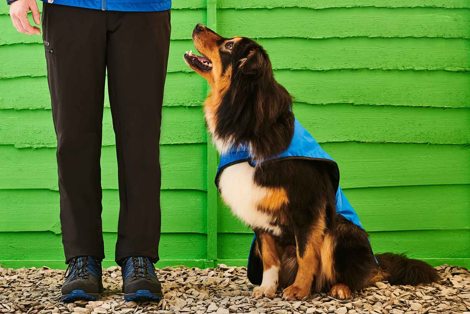 Dog looking up at owner who is wearing walking shoes.