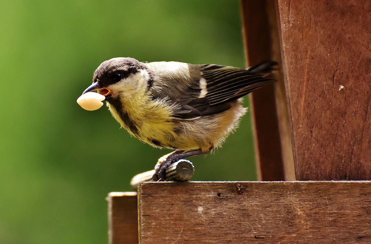 Bird eating seeds.