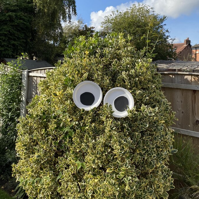 Monster eyes on a bush